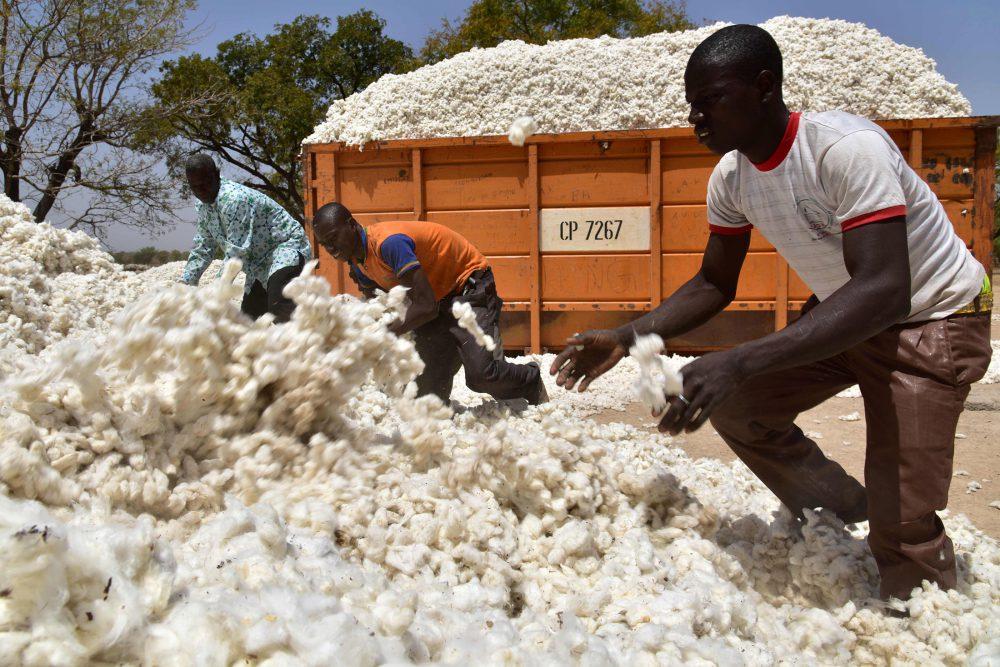 Burkina Faso Sees Cotton Output Rising 20% in 2017-18 Season