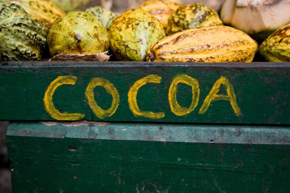 Ghana to subsidise fertiliser for cocoa farmers and halt free supplies