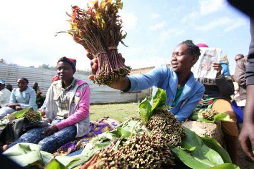 Miraa exporters to Mogadishu boycott trade over high prices